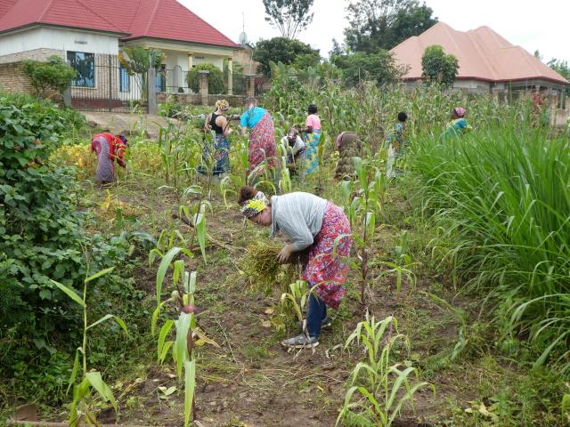 Working a corn field in Rwanda